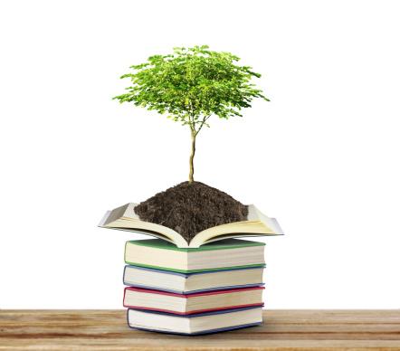 Projeto Educação Ambiental Educação Infantil